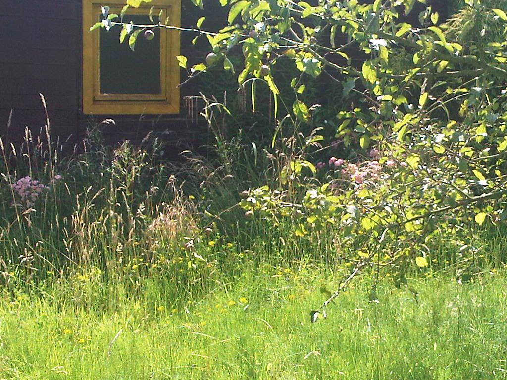 Allotment Garden 1