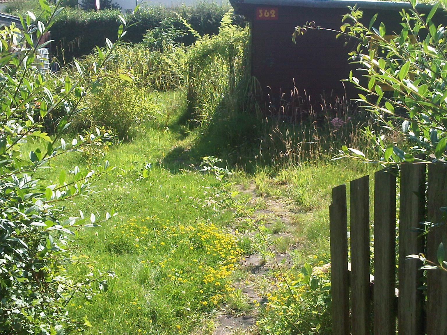 Allotment Garden 3